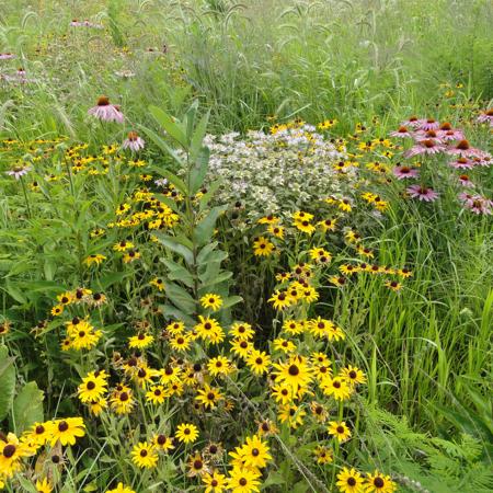 conservation reserve program Iowa