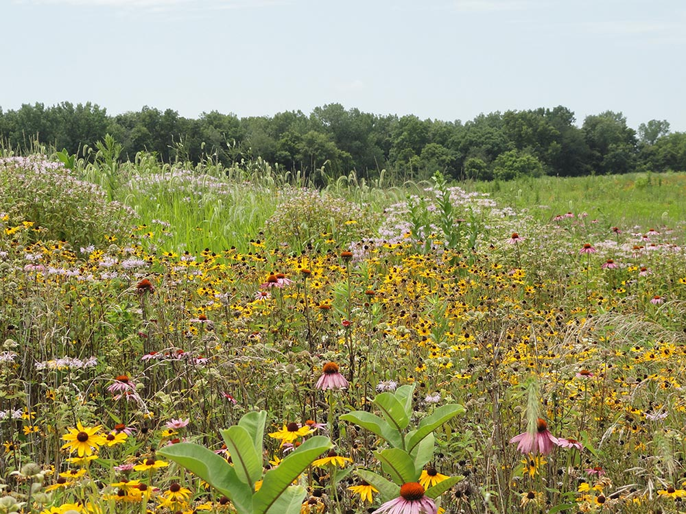 Pheasants Forever CRP Seed
