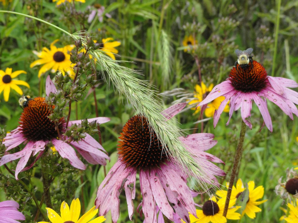 POLLINATOR FRIENDLY UTILITY-SCALE SOLAR PROJECTS